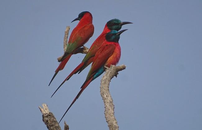 Groupe d'oiseaux
